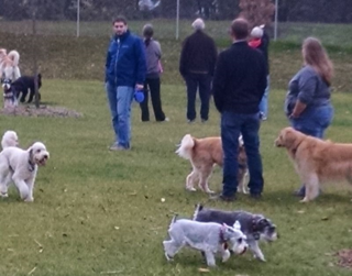 Walnut Grove Dog Park Dogs