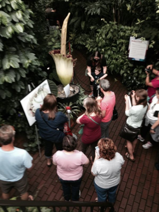 Corpse Flower Visitors